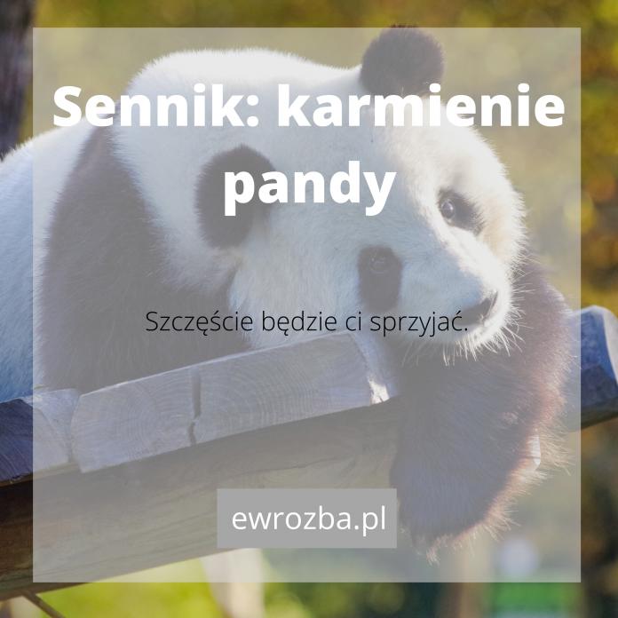 Panda we śnie - znaczenie 1