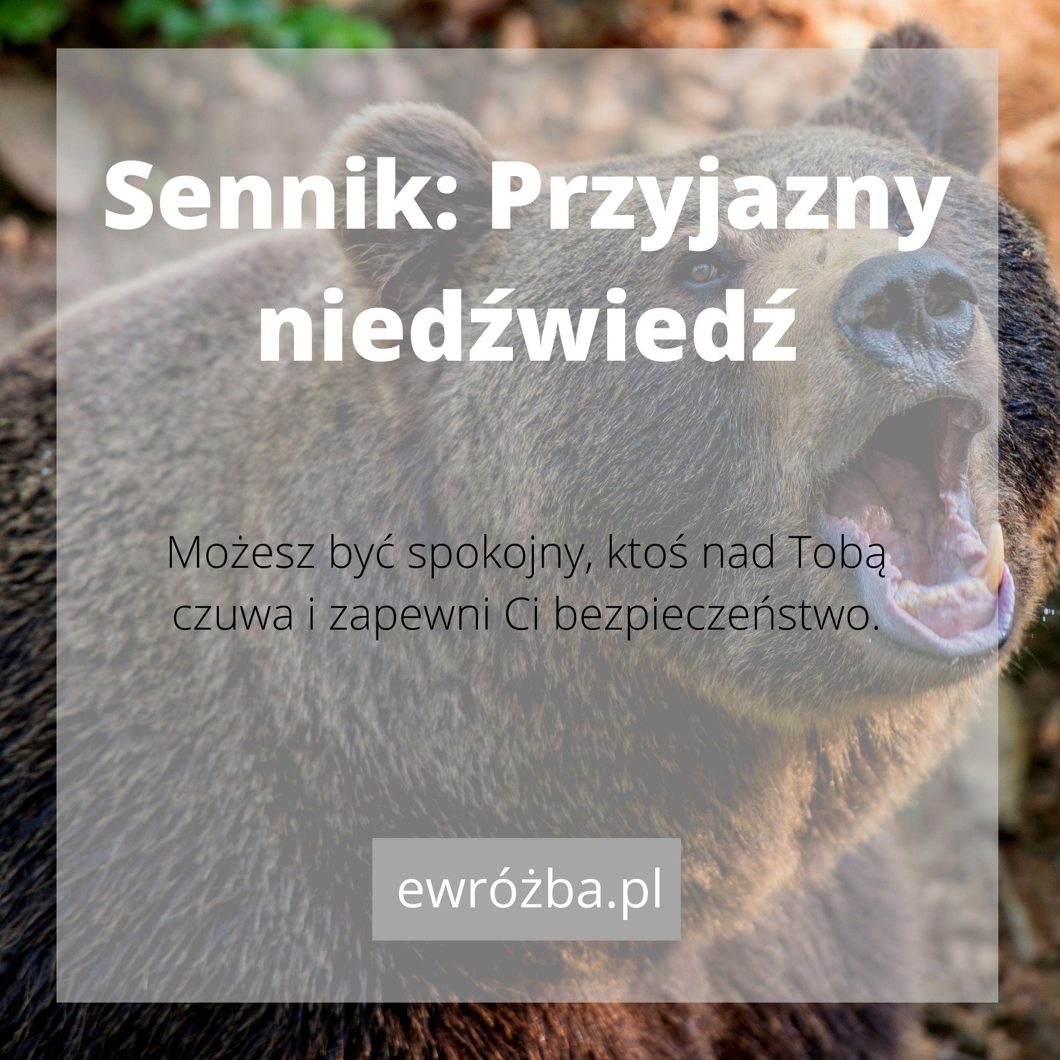 Niedźwiedź w snach 1