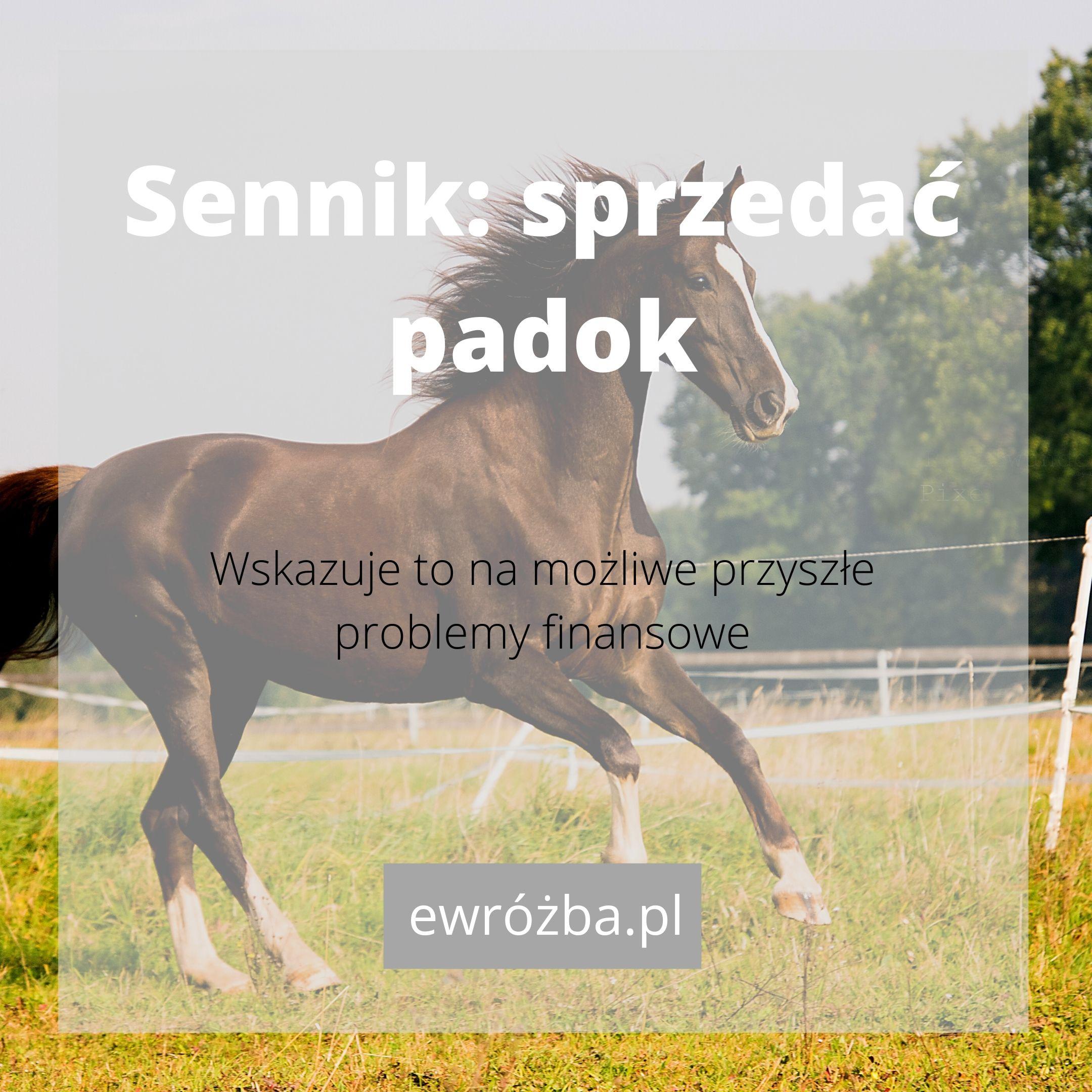 Konie we śnie - znaczenie 1