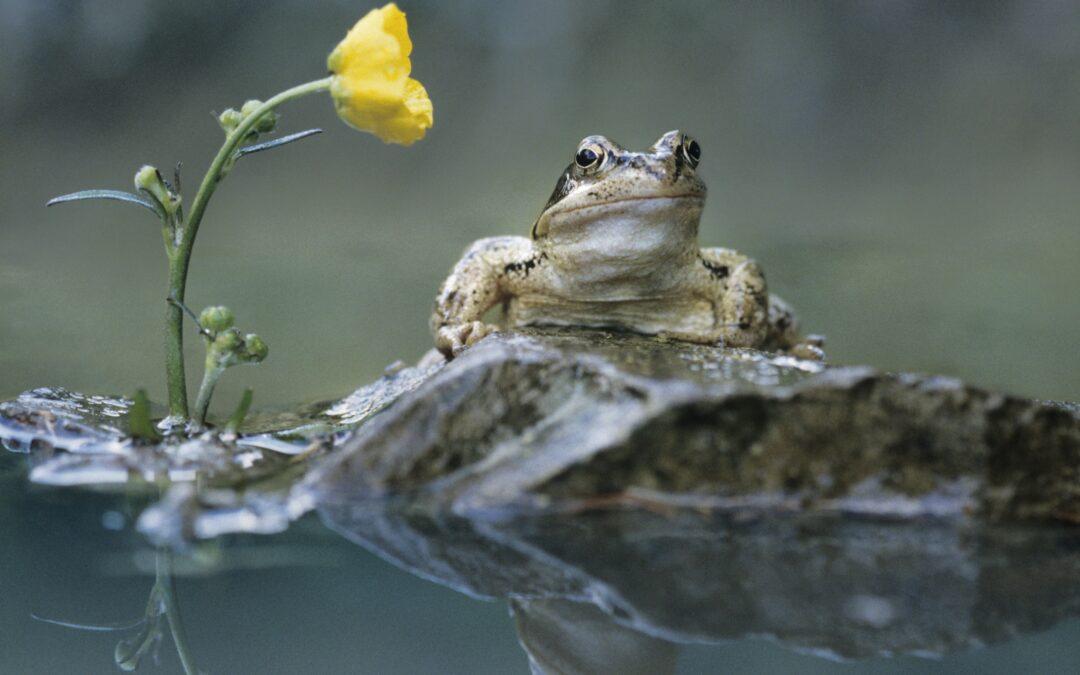 Żaba we śnie