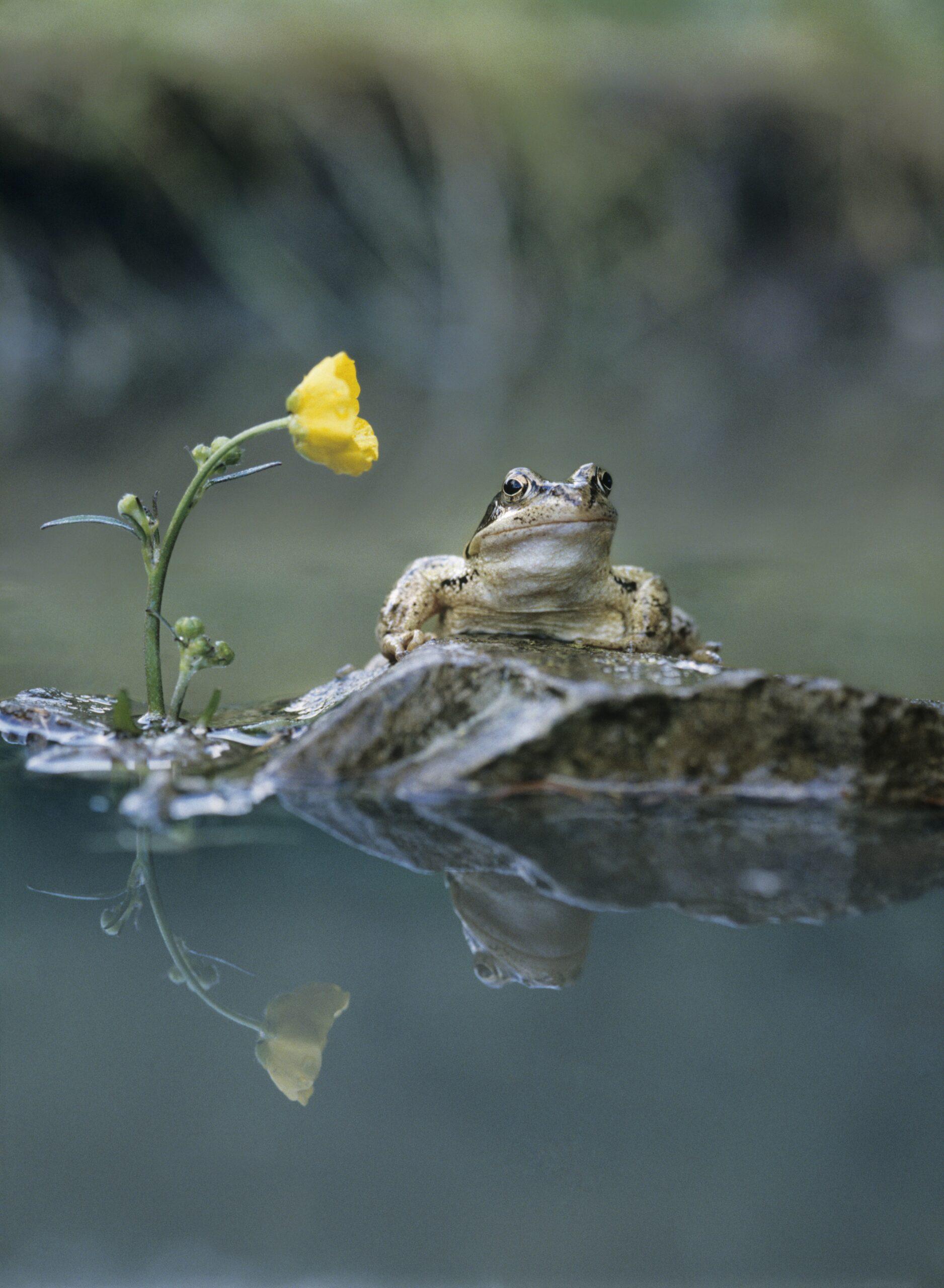 Żaba we śnie 1